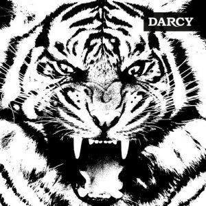 darcy-tigre